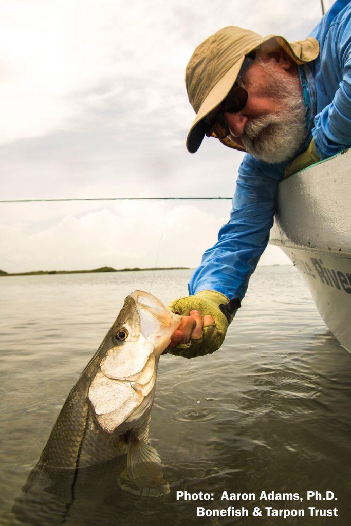 Flyfishing for Snook