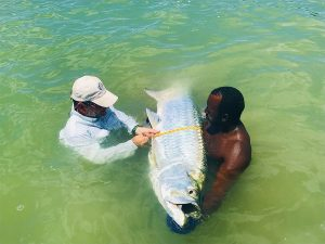 John, one of Belize's best fly fishing guides, helps Dr. Mike measure this large tarpon while fishing from the historic fishing lodge - Belize River Lodge
