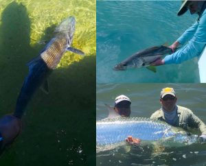 Best Fishing Days 2020.Fish Tales Nov 2019 2020 Package Rates Belize River Lodge